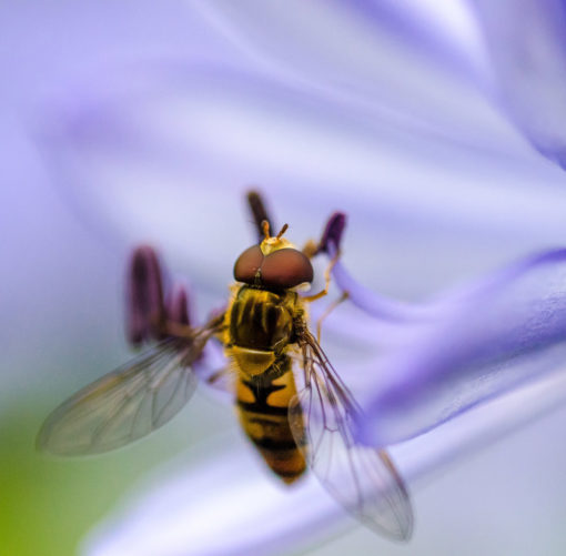 Homeopathy Allergy Relief, Allergy Relief Remedies, Picture Of A Bee, Natural Allergy Relief,